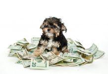Cheap Pets